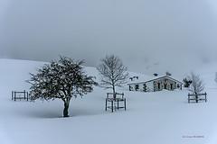 Tejo frente al refugio Ganguren (Jabi Artaraz) Tags: tejo ganguren refugio arraba nieve invierno negua