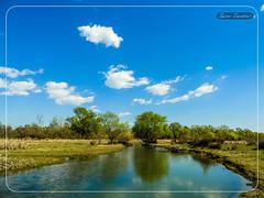 Ο Γαλλικός - Εχέδωρος ποταμός (Spiros Tsoukias) Tags: hellas macedonia thessaloniki greece axiosdelta nationalpark flamingo ελλάδα μακεδονία θεσσαλονίκη καλοχώρι γαλλικόσ αξιόσ λουδίασ αλιάκμονασ εθνικόπάρκο δέλτααξιού υδρόβιαπτηνά φλαμίνγκο φοινικόπτερα ερωδιοί αργυροπελεκάνοι αργυροτσικνιάδεσ λευκοτσικνιάδεσ βαρβάρεσ γεράκια πάπιεσ φαλαρίδεσ κύκνοσ κύκνοι πελεκάνοσ κορμοράνοσ στρειδοφαγοσ κοκκινοσκέλησ σταχτοτσικνιάσ ποταμογλάρονα χουλιαρομύτα γλάροσ αβοκέτα καλαμοκανάσ λίμνεσ φύση ποτάμια θάλασσα βουνά πεδιάδεσ ηλιοβασίλεμα ανατολήηλίου πουλιά ζώα lakes nature rivers sea mountains plains sunset sunrise birds animals εχέδωροσ ποταμοί λιμνοθάλασσεσ