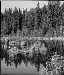 Still Waters (greenschist) Tags: banffnationalpark trees forest water reflections blackwhite canada lake 6x7 vermilionlakes alberta