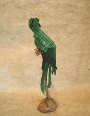 【Origami 】Quetzal Designed and folded by Hiroaki Kobayashi. (Lonely-Shiba) Tags: 折り紙 origami original bird