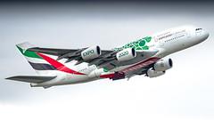 Airbus A380-861 A6-EEZ Emirates - Dubai Expo 2020 Livery (William Musculus) Tags: frankfurt am main rhein frankfurtmain fraport eddf fra airport spotting aviation plane airplane william musculus airbus a380861 a6eez emirates dubai expo 2020 livery special scheme a380800 ek uae