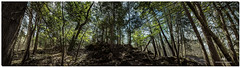 MAY 2019 NGM_1159_7765-1-222- PANO (Nick and Karen Munroe) Tags: panorama pano rocks moss mossy rocky rock tree trees denseunderbrush brush scrub hiltonfallsconservationarea hiltonfalls milton campbellvillesideroad campbellville haltonhills forest woods hike trail hiking forests wood natural karenick23 karenick karenandnickmunroe karenandnick munroe karenmunroe karen nickandkaren nickandkarenmunroe nick nickmunroe munroenick munroedesigns photography munroephotoghrpahy munroedesignsphotography nature landscape brampton bramptonontario ontario ontariocanada outdoors canada d750 nikond750 nikon nikon1424f28 1424 1424f28 nikon1424 nikonf28 f28 wideangle wideanglelens colour colours color colors panoramic