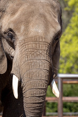 im Tierpark Berlin (Georg Brutalis) Tags: berlin elefant friedrichsfelde tierpark zoo deutschland