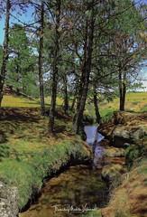 To the memory of tree. (tlamatinimolotla) Tags: water green canonmexicana ilovephotography river tree