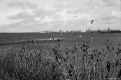 Punta Brava, Montevideo (Celso Kuwajima) Tags: bokeh epsonv800 silverfastai 20190548 sea ilfordpanfplus50 ocean outdoor analogphotography leicasummicroncollapsibleltm502 bw leicamp montevideo montevideodepartment uruguay jetty