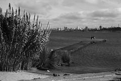 Punta Brava, Montevideo (Celso Kuwajima) Tags: cityview epsonv800 silverfastai 20190548 sea fishing people ilfordpanfplus50 ocean outdoor analogphotography leicasummicroncollapsibleltm502 bw leicamp montevideo montevideodepartment uruguay jetty