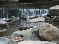 Spotted Sandpiper (trust me) (Thundercheese) Tags: rockcreekpark washington dc bird