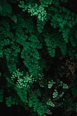 DSCF1419 (四月の孤狼) Tags: fujifilmxt20 fujifilmxf55200mmf3548rlmois flower lotus snap travel xf55200 xt20 macao macau photo plant snapshot tree 中国澳门 中國澳門 攝影 旅行 植物 樹 澳門 澳門特別行政區 澳门特别行政区 照片 花 荷花 遊攝 馬交 马交