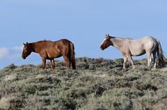Wild horses (ritchey.jj) Tags: horses