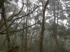 Misty Forest (cowyeow) Tags: hongkong forest mist china chinese asia asian atmosphere misty trees nature composition taimoshan