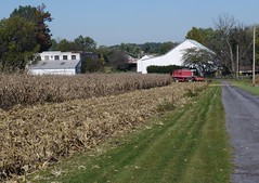 Not just chicken feed . . . (ericrstoner) Tags: corn maize cornharvest zeamays cornfield lancastercounty pennsylvania manheimtownship chickenfeed harvest