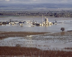 Massive flood in 1997 and breach on the east levee of the Feather River, California, USA (water.alternatives) Tags: flood northerncalifornia valley 1997 leeve featherriver rainfall yubacounty orchard reclamationdistrictno784 featherriverblvd yubarivermouldingmillwork california usa ca