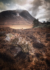 glen etive glow (akh1981) Tags: scotland scenic amateurphotography beautiful benro nikon nature nisi nisifilters mountains moody morning landscape glencoe glenetive travel trees tranquil walking wideangle sky clouds countryside calm outdoors hiking highlands