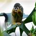 Monkeys 6