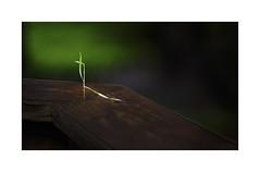 Life (sorrellbruce) Tags: spring life