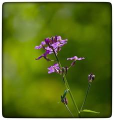Wildflowers (vui.la9) Tags: