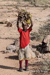 Firewood collection (10b travelling / Carsten ten Brink) Tags: africa boy kenya african group east afrika ethnic samburu kenia firewood africain afrique kenyan eastafrica africaine ostafrika 2019 rendille icarry carstentenbrink iptcbasic samburucounty 10btravelling kenya2019