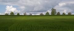 Green Fields (picsessionphotoarts) Tags: nikon landschaft landschaftsfotografie landscapephotography bayern bavaria deutschland germany nikonphotography nikonfotografie landscape nikond850 festbrennweite primelens afsnikkor50mmf14g franken franconia mai may lichtundschatten