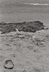 Beach 7 (adam_h_photo) Tags: halfframe olympuspenft monochrome film filmphotography 35mm analogue analog photofilmy ishootfilm istillshootfilm blackandwhite beach