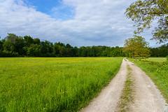 Landschaft (KaAuenwasser) Tags: feuchtwiese wald feldweg himmel wolken natur baum bäume walnussbaum gelb grün blüten blumen wild wetter tag naturschutzgebiet landschaft bild 2019