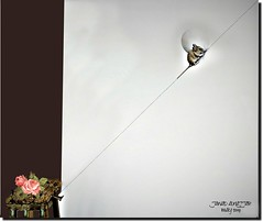 CLIMBING UP (jawadn_99) Tags: fauna rat mouse climbing table roses flowers interrestingness explore painting photography art artistic creation prr holand lahay compinations neatherland europe the hague netherland coth5