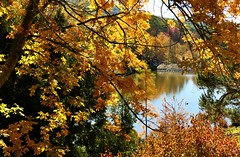 A Glimpse of the Lake, Mt Lofty Botanic Garden, Adelaide, South Australia (Red Nomad OZ) Tags: garden botanicgarden mountlofty mountloftybotanicgarden plant nature colour color outdoor autumn fall season adelaide australia adelaidehills southaustralia lake tree leaf