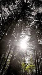 (farmspeedracer) Tags: forest sun ray light shadow 2019 mai may mayo tree sky wald