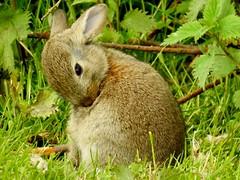 Happy Sunday ❤ (BrigitteE1) Tags: happysunday bunny specanimal specanimalphotooftheday