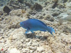 Sunday Fun Day Florida Keys Snorkel Plus Scuba (Sail Fish Scuba) Tags: sunday fun day florida keys snorkel plus scuba