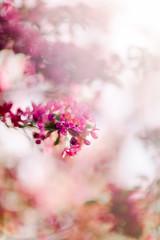 (Rebecca812) Tags: florals flower pink magenta petals fresh spring springtime beauty nature backgrounds canon selectivefocus shallowdepthoffield dof sunlight lensflare rebecca812