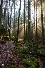 Rayons (Vosges, France) (AT Photographie) Tags: forest forêt soleil rayons vosges gérardmer nikkor nikon sun spring printemps