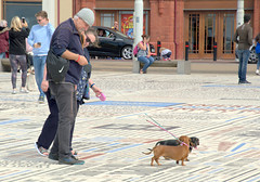 Dog walking on the Comedy Carpet, Blackpool (Tony Worrall) Tags: blackpool resort place england english north northwest visit county town area northern location lancs lancashire uk fylde fyldecoast coastal tour country welovethenorth street streetphotography urban candid people person capture outside outdoors caught photo shoot shot picture captured picturesinthestreet photosofthestreet nw update attraction open stream item greatbritain britain british gb buy stock sell sale ilobsterit instragram couplc dogs small