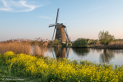 Windmill at Kinderdijk (Petra S photography) Tags: windmill oldwindmill kinderdijk unescoworldheritagesite netherlands niederlande dutchheritage dutch eveninglight evening moulinàvent windmühle southholland südholland