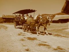 Lovas szekér (MullerAdam_hu) Tags: kirándulás túra látnivaló lovasszekér szekér ló skanzen hagyomány örökség magyar magyarország szentendre canonpowershots2is 2007 trip tour sight ridercart chariot horse tradition heritage hungarian hungary