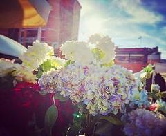 Il fascino di un fiore è nelle sue contraddizioni – così delicato nella forma ma forte nel profumo, così piccolo nelle dimensioni ma grande nella bellezza, così breve nella vita ma con un effetto così lungo. (Nabel Grant) Tags: nature flowers canonphotography red pink photooftheday petal