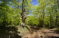 Nebrodi (roberto_86) Tags: italia italy sicilia silcy nebrodi sentierocai cai caibelpasso