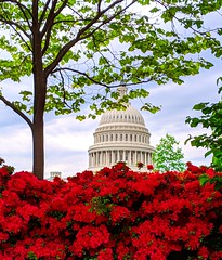 dome & azaleas (ekelly80) Tags: dc washingtondc april2019 spring capitolhill dome azaleas red flowers view trees