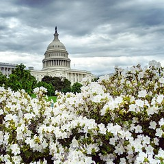 above the azaleas (ekelly80) Tags: dc washingtondc april2019 spring capitolhill view flowers white azaleas dome sky clouds moody