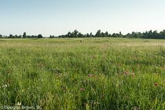 Prairie Pupils (Douglas Brown Sr.) Tags: woodsprairie grasses grasslands missouri prairie students tallgrassprairie