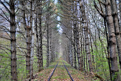 Into the Forest (MRD Images) Tags: rail railway tracks forest northcountry northconway conway