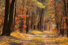 On forest path / Erdei úton (Ibolya Mester) Tags: