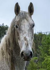 THE GLANCE (LitterART) Tags: horse equestrian pferd nikond800 blick head kopf