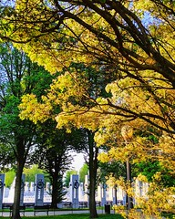 morning glow (ekelly80) Tags: dc washingtondc april2019 spring nationalmall worldwariimemorial light morning sunrise golden glow trees