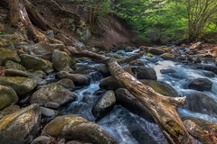 7-8 river (kellypettit) Tags: river log water creek rapids forest waterfall