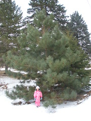 Olivia By Big Pine Tree (Pictures by Ann) Tags: olivia pinetree frontyard austrianpine dadandjimplanted pinksnowsuit snowsuit snow