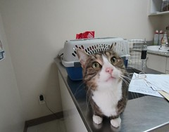 George - 5 year old neutered male