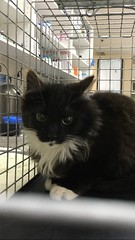 Tootsie - 6 month old spayed female