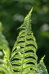 (BS-Foto) Tags: leica leicavlux leicavlux1 vlux1 vlux grün green vert verde garten garden bokeh