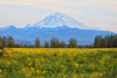 Mt Rainier (Mark A. Bowers) Tags: mt rainier national park mount mountain volcano washington enumclaw seattle pnw pacific northwest