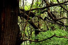 DSC_0052mod (pedrop61) Tags: boschi alberi primavera